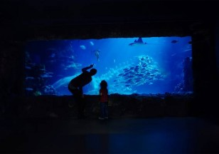 Sea Life Birmingham Breaks - Save 10%